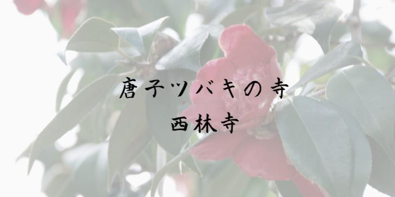 兵庫県西脇市 西林寺 唐子ツバキ
